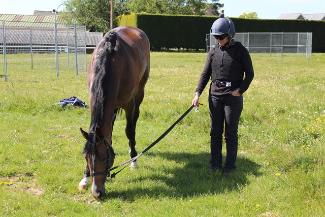 Mark of Gold enjoying a pick of grass post exercise with Wendy